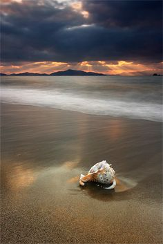 *Seashell (by Kani Polat)