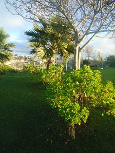 Habitantes de Calypso Gardens.  Vista de Jardín de Fiestas Calypso Gardens