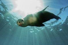 La tuberculosis llegó a América a bordo de mamíferos marinos