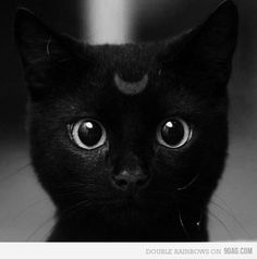 Luna. If you get this, you're awesome. High five my friend!