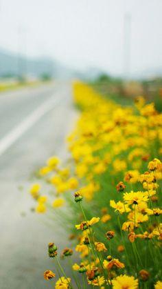 Roadside flowers iPhone 6 Wallpaper