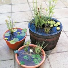 How to Make an Outdoor Water Garden