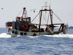 illegal fishing -End Illegal Fishing
