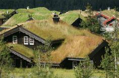 NORWAY: Norwegian grass roof tops