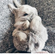 "854 Likes, 2 Comments - rabbit (@rabbit__.__tv) on Instagram: ""Little thumper @shinebandol From @bunniesnrabbits ------------------ #rabbits #rabbitsofig…"""