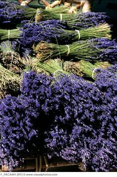 does it get any better than smelling lavender after a summer rain? i don't think so. :)