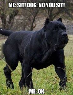 Huge Black Dog
