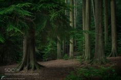 In The Forest by artursomerset. Please Like http://fb.me/go4photos and Follow @go4fotos Thank You. :-)