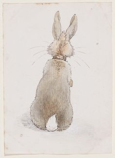 'Rabbit Seen from Behind' (1890′s). Pen and ink with watercolour by Beatrix Potter (1866–1943).  Image and text courtesy MFA Boston