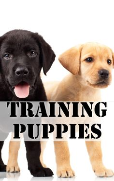 Live's Bow Wow Week continued with crate training and new puppy tips from dog trainer Justin Silver.