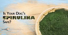 Did you know that spirulinais bacteria? Most people think spirulina (Arthrospira platensis) is a type of alga, but it's actuallya type of bacteria called cyanobacterium. What makes spirulina so special? A blue pigment that allows the bacteria to produce their own food through photosynthesis, like a plant. Spirulina is a nutritional powerhouse that is more …