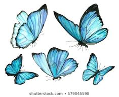 A set of blue watercolor butterfly drawing Butterfly Images, Stock Photos & Vectors Blue Butterfly Tattoo, Butterfly Pictures, Butterfly Painting, Butterfly Watercolor, Butterfly Sketch, Easy Butterfly Drawing, Semicolon Butterfly, Butterfly Clip Art, Butterfly Design
