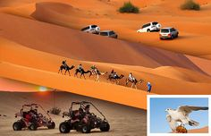 How To Choose the Best Desert Safari Adventure in Dubai Red More:-  http://goo.gl/SDFVkC
