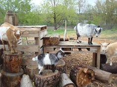 a fun goat yard tower, what a great idea for Issabelle's goats this spring!
