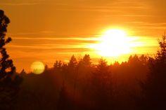 Die Natur von New England (USA) erlebt schrittweise ein erstaunliches Comeback. Während in der Mitte des 18. Jahrhunderts die Wälder für Ackerland auf nur noch 28% der Fläche abgeholzt wurden, bedecken diese heute - nach 160 Jahren - wieder 80% von New England.