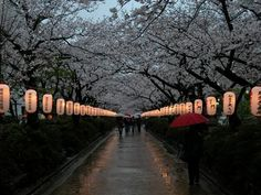 Kamakura Japan 6