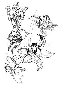 orchid drawing - Google Search