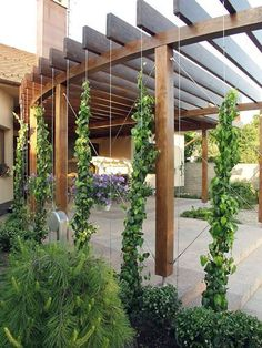 This would be awesome out front. The curve of the pergola could mimic the curve of your steps. You could have cement from the house to the edge of the pergola and plants framing the outside with pots of plants on the patio.