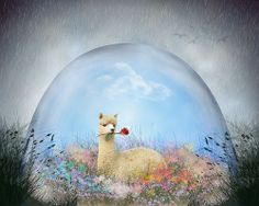 #Spring is here! #AlpacaLovers!