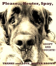 Just DO it, already!!!!!!!!!!!!! Sponsor, Foster, Adopt - DON'T BREED. SPAY AND NEUTER. MAKE IT AFFORDABLE,FOR ALL!!!!!!!!!!!!!!!!!!!!