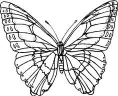 44 fantastiche immagini su farfalle disegni farfalle for Immagini farfalle per desktop