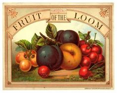 Antique Fruit of the Loom trade card