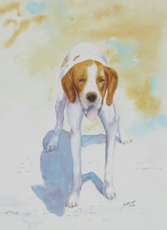 Hunting dog in watercolour
