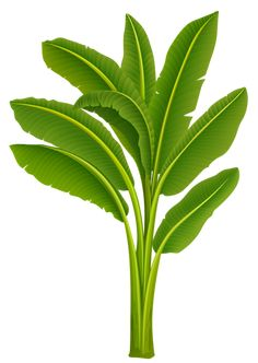 Exotic Tree PNG Image
