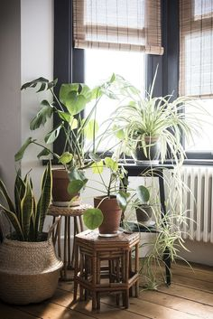 Комнатные цветы в интерьере: 20 примеров размещения – Вдохновение