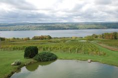 Wine country in the Finger Lakes, NY!