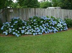 How to propagate hydrangeas & other budget gardening ideas!