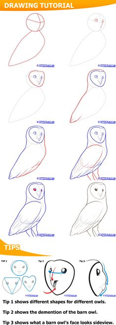 How to draw a barn owl. #Owls #HowTo
