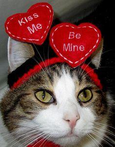 valentine cat pillow pet