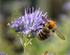 Honey, Bee, Pollen