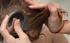 Lice comb Hearing that your child has hair lice can seem devastating if you are unaware of how to remove them. Fortunately, there are lice home remedies