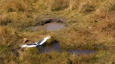 Heli-safari with Helicopter Horizons at Xigera Camp #OkavangoDelta #saddle_billed_stork