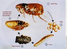 Are you concerned about your rabbit who is being pestered by fleas? Keep your concerns away and latch on to the flea solutions provided by the proficient pest control agency to avert the attacks of fleas.