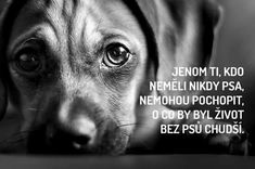 .. try to look your dog sincerely and long into the eyes .. when ...- ..zkuste se podívat svému psovi upřímně a dlouze do očí..přijde když js…  .. try to look your dog sincerely and long into the eyes .. comes when I cried, when I laughed, when one lost the other helped me, senses when I'm afraid and I'm scared..can rejoice like me :] and much more..and those nerves atinko where you are again;]   -#nicewordsforboyfriendloveyou #nicewordsforboyfriendrelationships #nicewordsforboyfriend Dachshund Breed, Wire Haired Dachshund, Funny Dachshund, Daschund, Dachshund Love, Dachshund Personality, Animals And Pets, Cute Animals, Compassion Fatigue