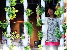 Britta Riley wanted to grow her own food (in her tiny apartment in New York). So she and her friends developed a system for growing plants in discarded plastic bottles. Hydroponic Gardening, Aquaponics, Organic Gardening, Container Gardening, Indoor Gardening, Vegetable Gardening, Organic Hydroponics, Vertical Hydroponics, Hydroponic Vegetables