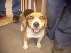 FOUND DOGS ...SEE LIST>>>(click on picture to see all dogs at shelter) ...CARROLL COUNTY DOG POUND CARROLLTON, OHIO... http://www.petfinder.com/pet-search?shelter_id=OH302  ALSO ADOPTABLE! PLEASE REPIN!