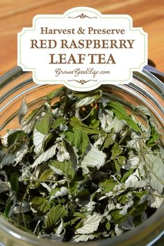 Menstrual Cramps Remedies Red raspberry leaf tea has been used for centuries as a natural remedy for conditions involving the uterus including pregnancy, childbirth, menstruation, and menopause. See how to harvest and preserve your own raspberry leaf tea. Natural Home Remedies, Herbal Remedies, Natural Healing, Health Remedies, Cold Remedies, Holistic Healing, Bloating Remedies, Healing Herbs, Cooking With Turmeric