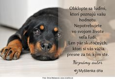 Animals And Pets, Quotes, Author, Pets, Quotations, Qoutes, Quote, Shut Up Quotes