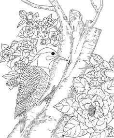 very advanced coloring pages | South carolina, Wren and Free printable coloring pages on ...