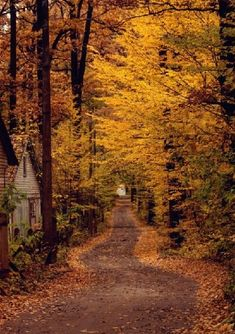 Country road covered with beautiful fall foliage. Autumn Nature, Autumn Leaves, Autumn Forest, Autumn Rain, Late Autumn, Golden Leaves, Beautiful World, Beautiful Places, Beautiful Roads
