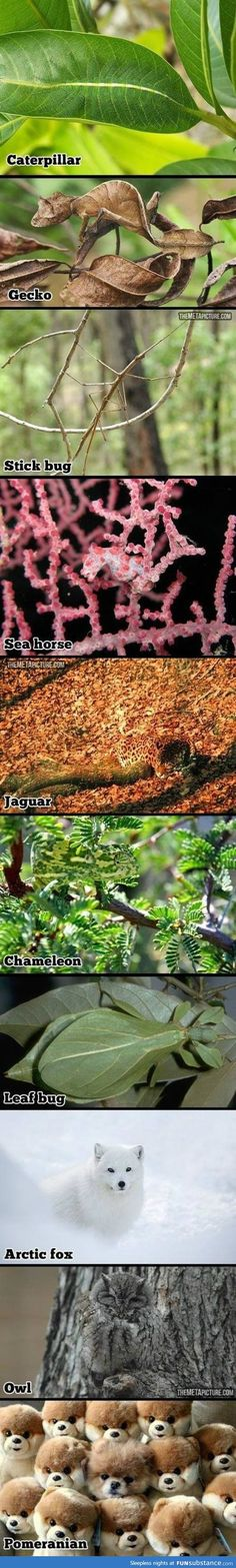 Camouflaged animals Awwww the last one is kawaii