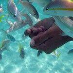 Pesci tropicali Maracajau - foto elrentaplats