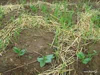 Νοέμβριος στο αγρόκτημα title= Herbs, Garden, Plants, Garten, Lawn And Garden, Herb, Gardens, Plant, Gardening
