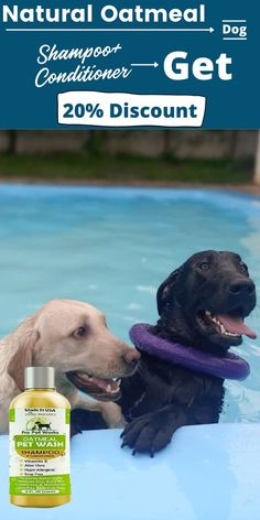 A dog's skin is naturally oily and rough, so they don't need as much conditioning as humans. It makes sense for them to use more shampoo. The following homemade dog shampoo recipes can be used in conjunction with commercial dog shampoos for maximum effectiveness. #homemadeshampoo #shampoo #dogs Homemade Dog Shampoo, Natural Dog Shampoo, Cat Lovers, Labrador Retriever, Dog Cat, Conditioner, Shampoos, Pets, Nature