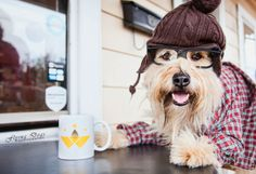 Behind the scenes with Buster, The Coffee Dog (Dogs of Asheville Calendar 2014)