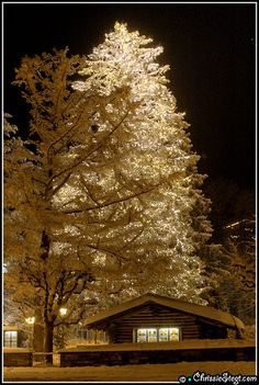 wow so beautiful love this one....I wish we could decorate one of our big pine trees like this.